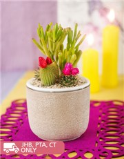 Picture of Garden Cacti in Pottery Vase!