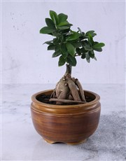 Picture of Bonsai Tree in Pottery!