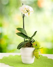 Picture of Joyful Easter Orchid!