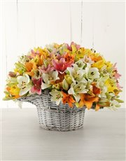 Picture of Mixed Asiflorum Lilies in Willow Basket!