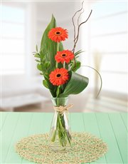 Picture of Petite Stepped Orange Gerbera Gift!