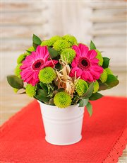 Picture of Pail of Gerberas Petite!