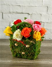 Picture of Mixed Roses in a Moss Basket!