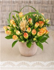 Picture of Mini Carnations in a Pottery Vase Petite!