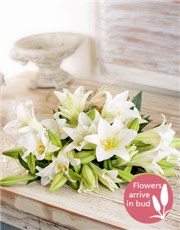 Picture of Lovely Lilies!