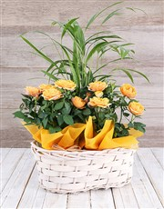 Picture of Double Rose Bush and Bamboo Basket!