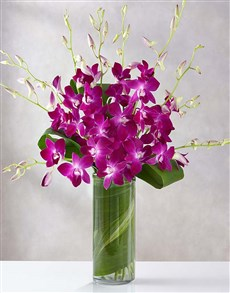 flowers: Orchid Embrace!