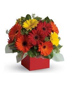 flowers: Glorious Gerberas!
