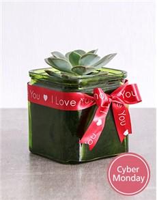 flowers: Mini Succulent in Square Green Vase!