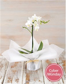 flowers: Bright Orchid in Wrapping!