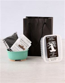 plants: Discovery Grow Your Own Bonsai Kit!