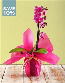plants: Tranquil Phalaenopsis Orchid!