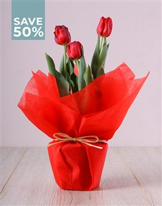flowers: Tulip Plant Mania!