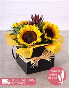 flowers: Sunflowers in a Black Box!