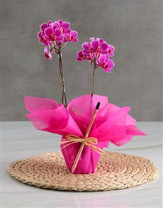 plants: Bloom and Grow Orchid Gift!