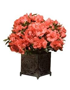 flowers: Azalea!