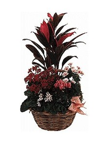 flowers: Original Plant Arrangement!