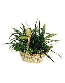 flowers: Assortment of Plants!