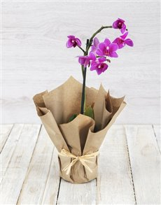 flowers: Pink Midi Orchid in Craft Paper!