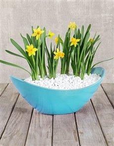 flowers: Daffodil in a Boat!