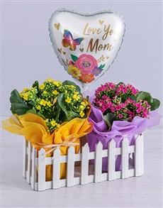 flowers: Pretty Pot Plants In Picket Fence!