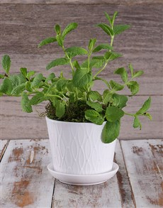 flowers: Potted Mint Herbs!