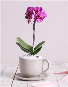 flowers: Pink Midi Orchid in Ceramic Pot!