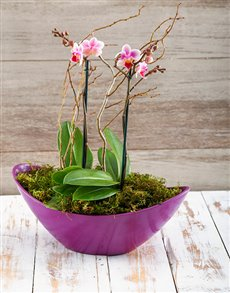 flowers: Orchids in a Boat!
