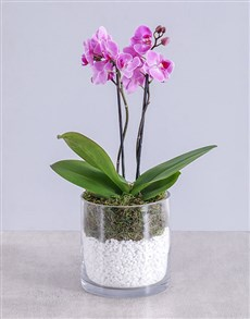plants: Pink Bold Orchid!