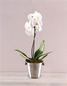 flowers: Elegant Orchid in ice Bucket!