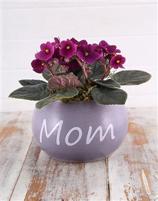 flowers: Mom Pot with Violet Plant!