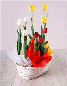 flowers: Mixed Tulip Basket!