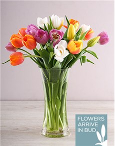 flowers: Rainbow Tulips in Clear Flair Vase!