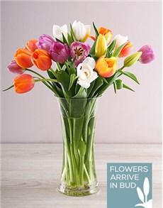flowers: Rainbow Tulips in Clear Flair Vase!