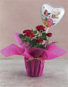 flowers: Potted Rose Bush!