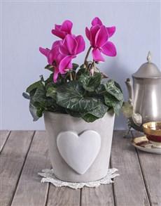 flowers: Blooming Heart Cyclamen Pot!