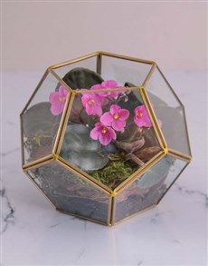 flowers: Mothers Day African Violet Terrarium!