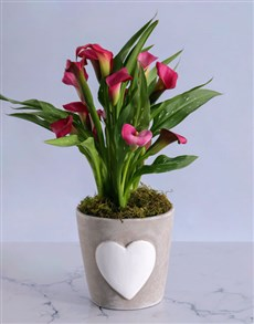 flowers: Pink Zantedeschia in Heart Pot for Mom!