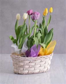 gifts: Mothers Day Tulips In Basket!