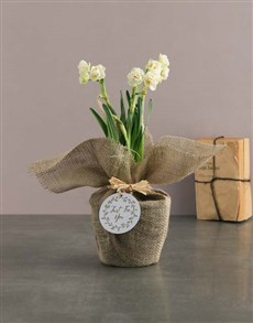 flowers: Mothers Day Daffodil In Hessian!
