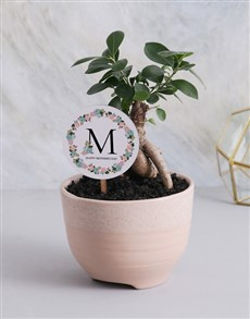 plants: Bonsai Tree For Mothers Day!