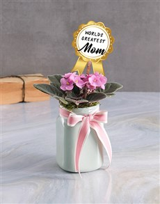 gifts: Mothers Day African Violet Plant!