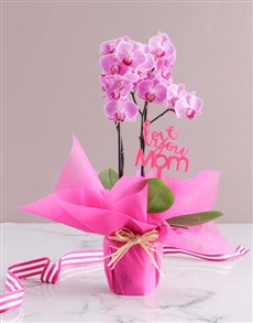 flowers: Mothers Day Pink Orchid!
