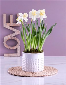 flowers: Serene White Mothers Day Daffodils!