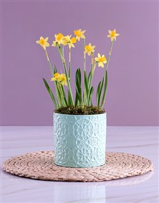 flowers: Sunny Daffodils in Mint Green Pot!
