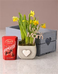 plants: Delightful Daffodils and Lindt!