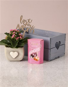 flowers: Pink Pleasures Kalanchoe Crate!