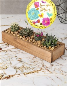 flowers: Mothers Day Succulent Tray!