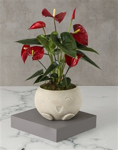 flowers: Mothers Day Red Anthurium Mojo Pot!