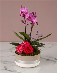 flowers: Garden Of Orchids And Blooms!